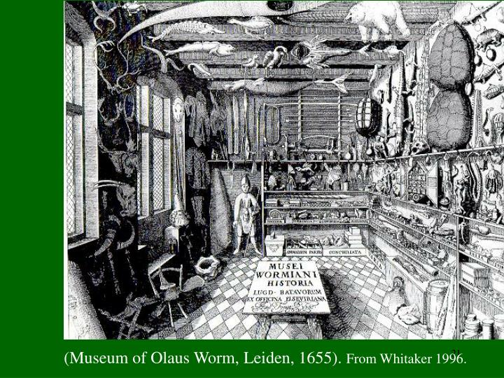 Museum of Olaus Worm, Leiden, 1655