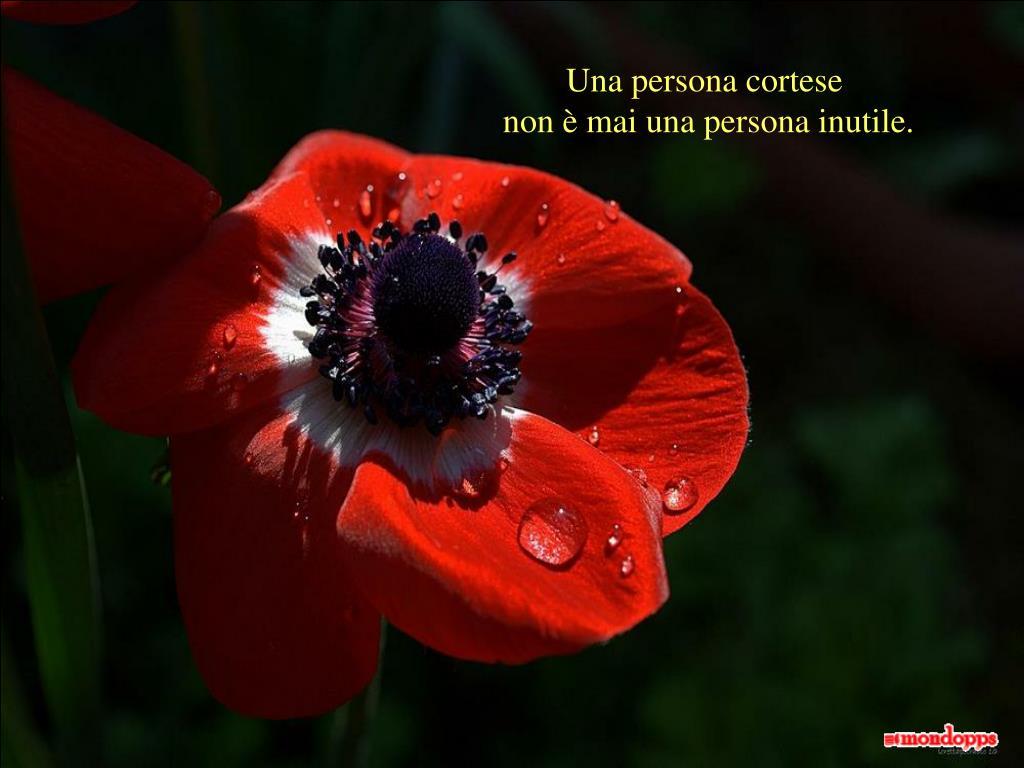 Una persona cortese