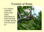 function of roots3
