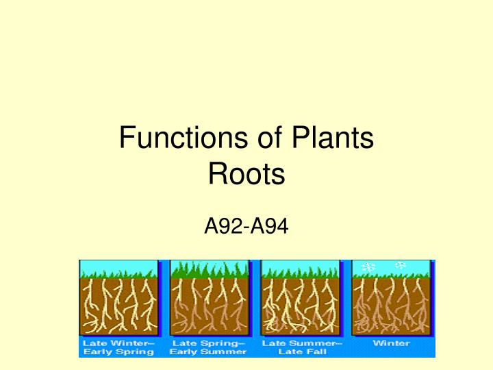 functions of plants roots