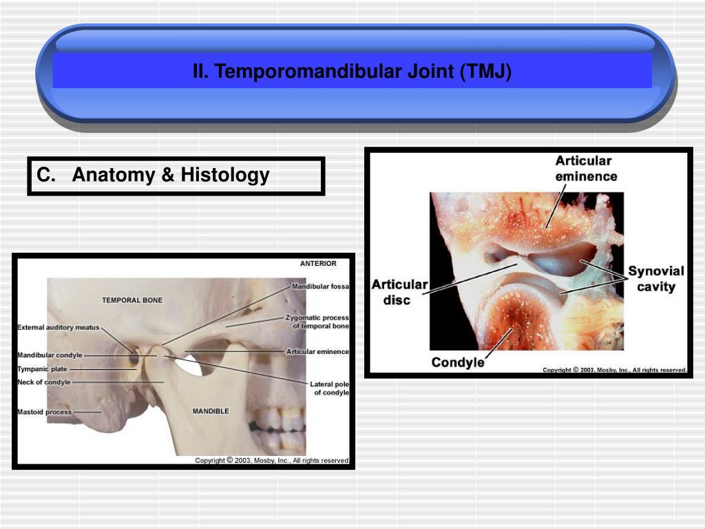 II. Temporomandibular Joint (TMJ)