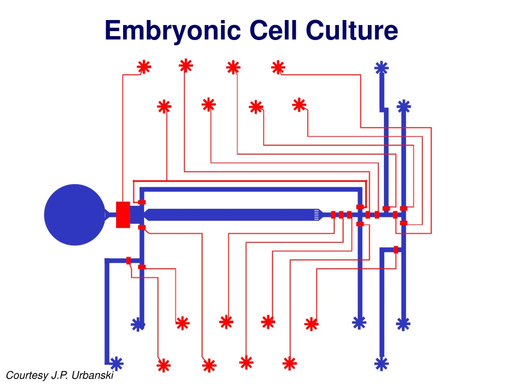 Embryonic Cell Culture