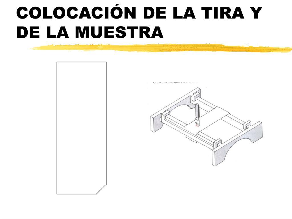 COLOCACIÓN DE LA TIRA Y DE LA MUESTRA