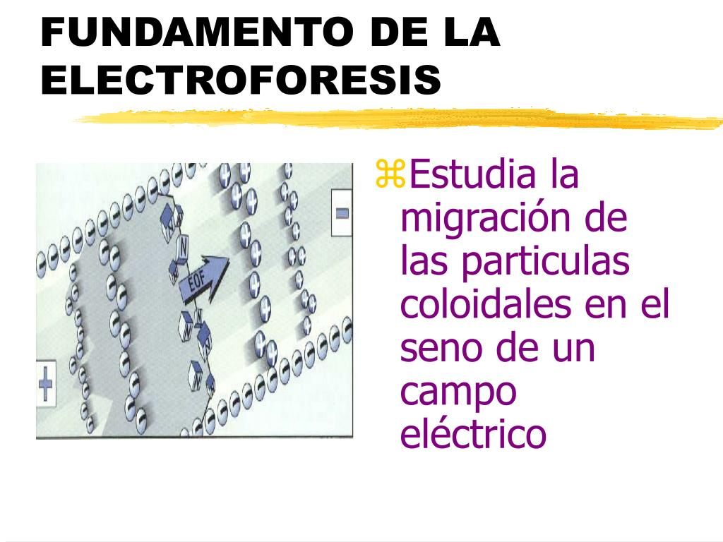 FUNDAMENTO DE LA ELECTROFORESIS