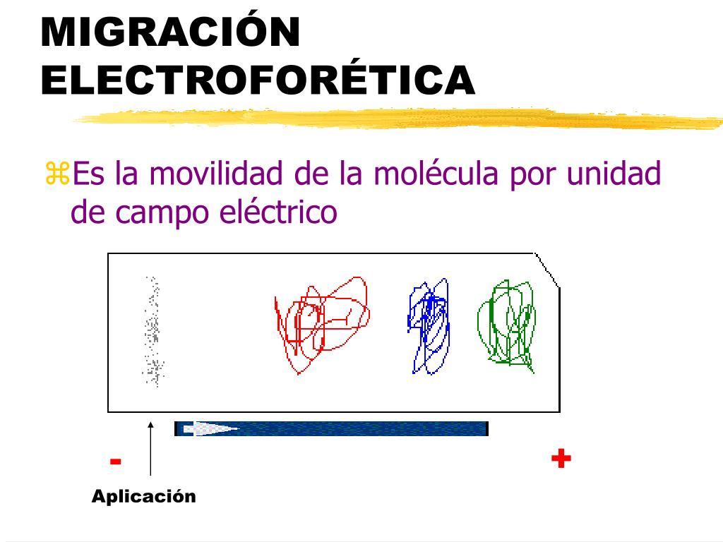 MIGRACIÓN ELECTROFORÉTICA