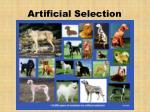 artificial selection25