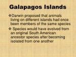galapagos islands8