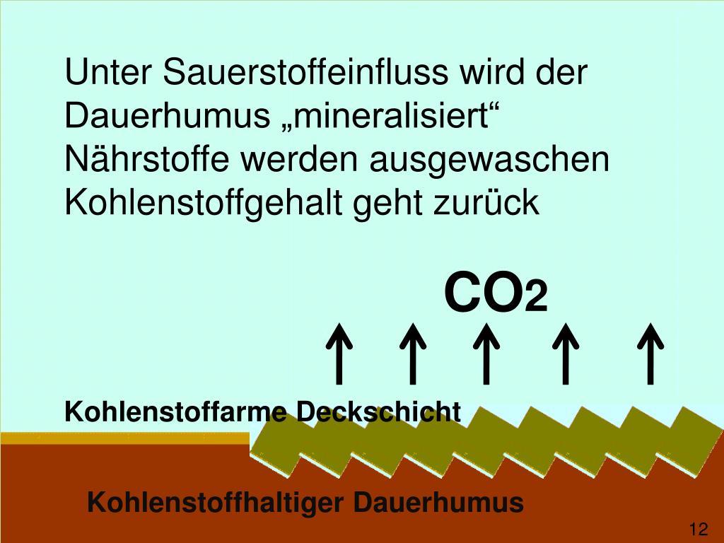 """Unter Sauerstoffeinfluss wird der Dauerhumus """"mineralisiert"""""""