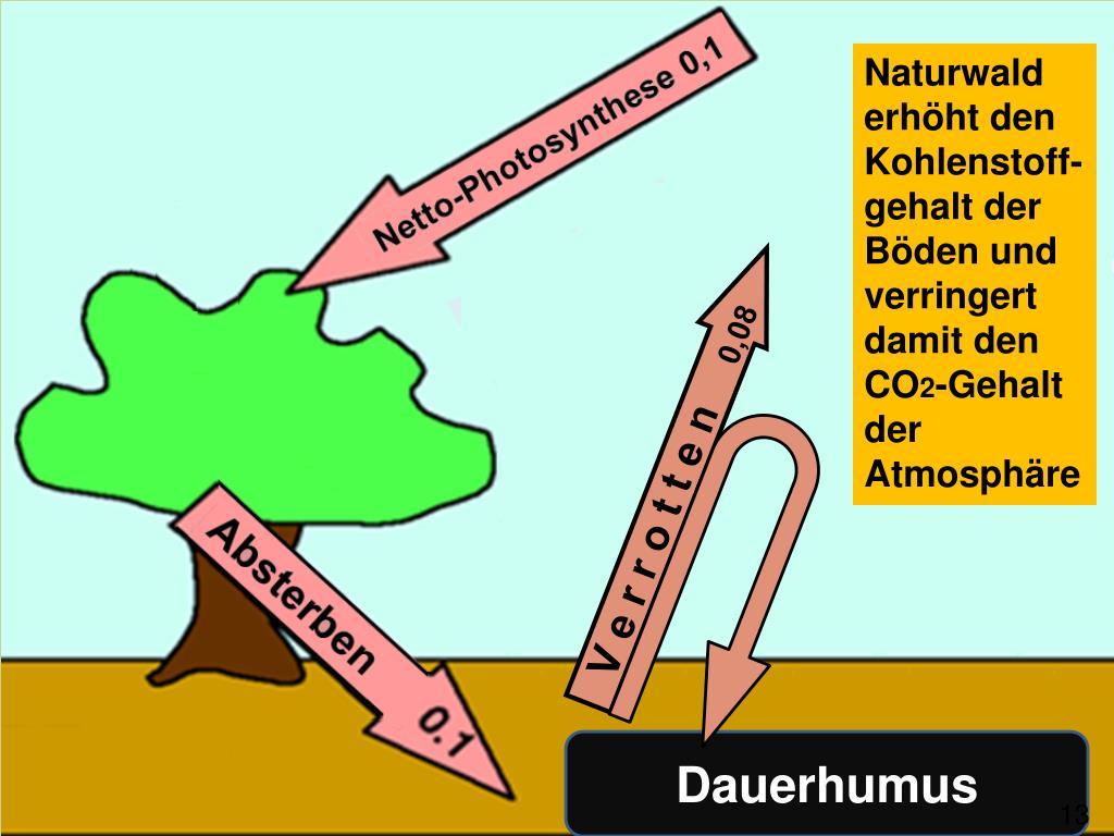 Naturwald erhöht den Kohlenstoff-gehalt der Böden und verringert  damit den CO