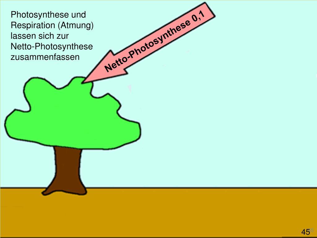 Photosynthese und Respiration (Atmung) lassen sich zur