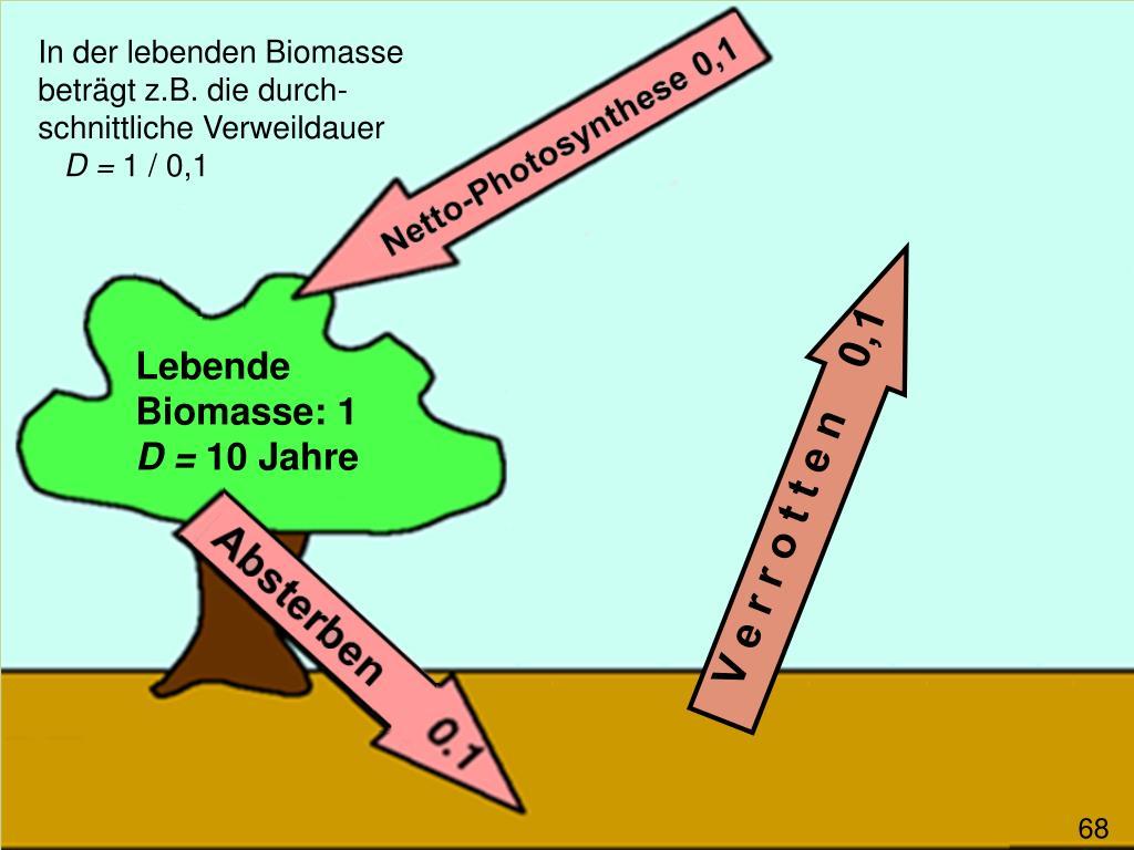 In der lebenden Biomasse beträgt z.B. die durch-schnittliche Verweildauer