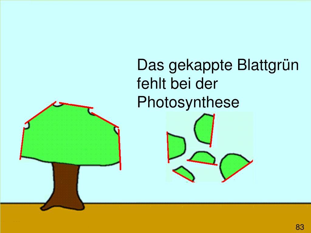 Das gekappte Blattgrün fehlt bei der Photosynthese