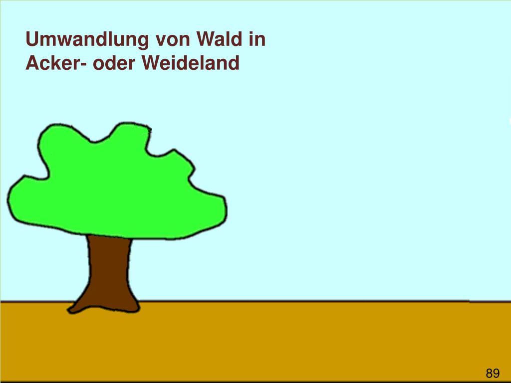 Umwandlung von Wald in Acker- oder Weideland