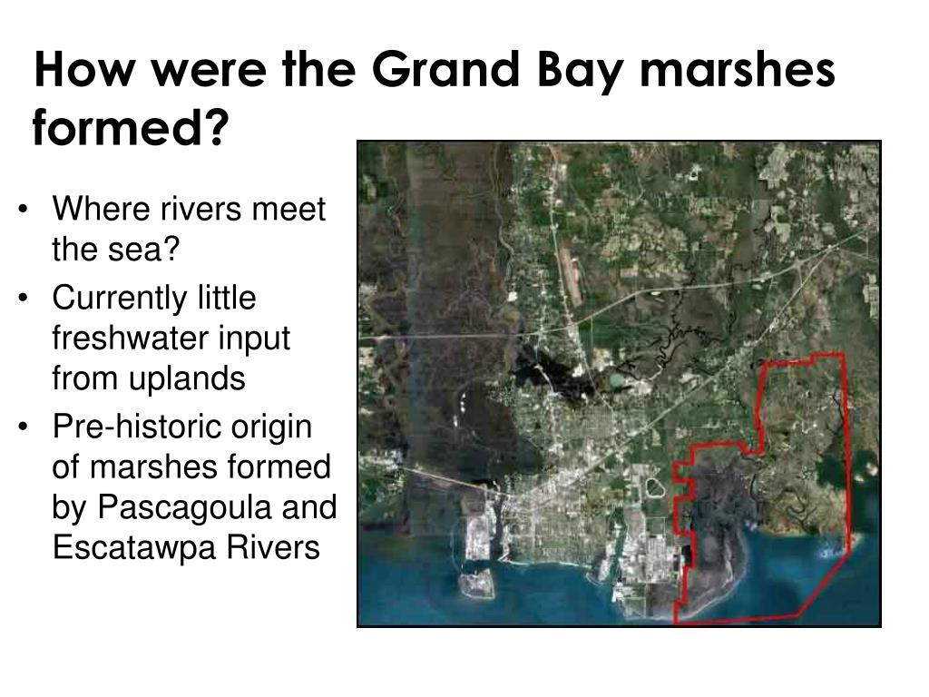How were the Grand Bay marshes formed?
