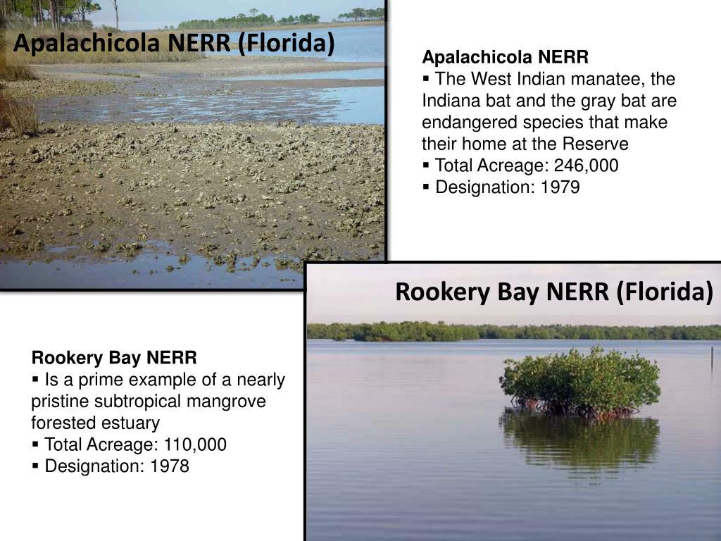 Apalachicola NERR (Florida)