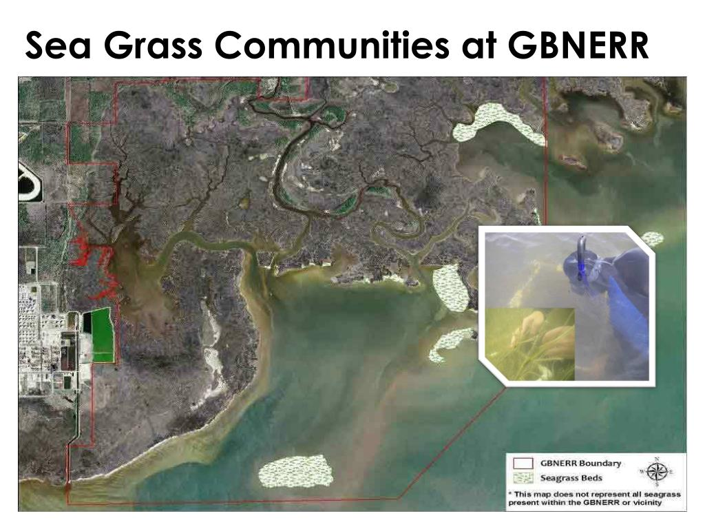 Sea Grass Communities at GBNERR