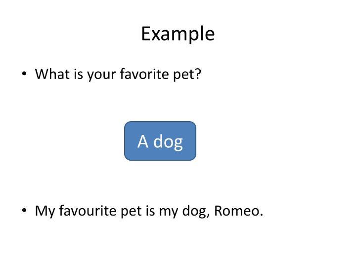 My dog romeo essay