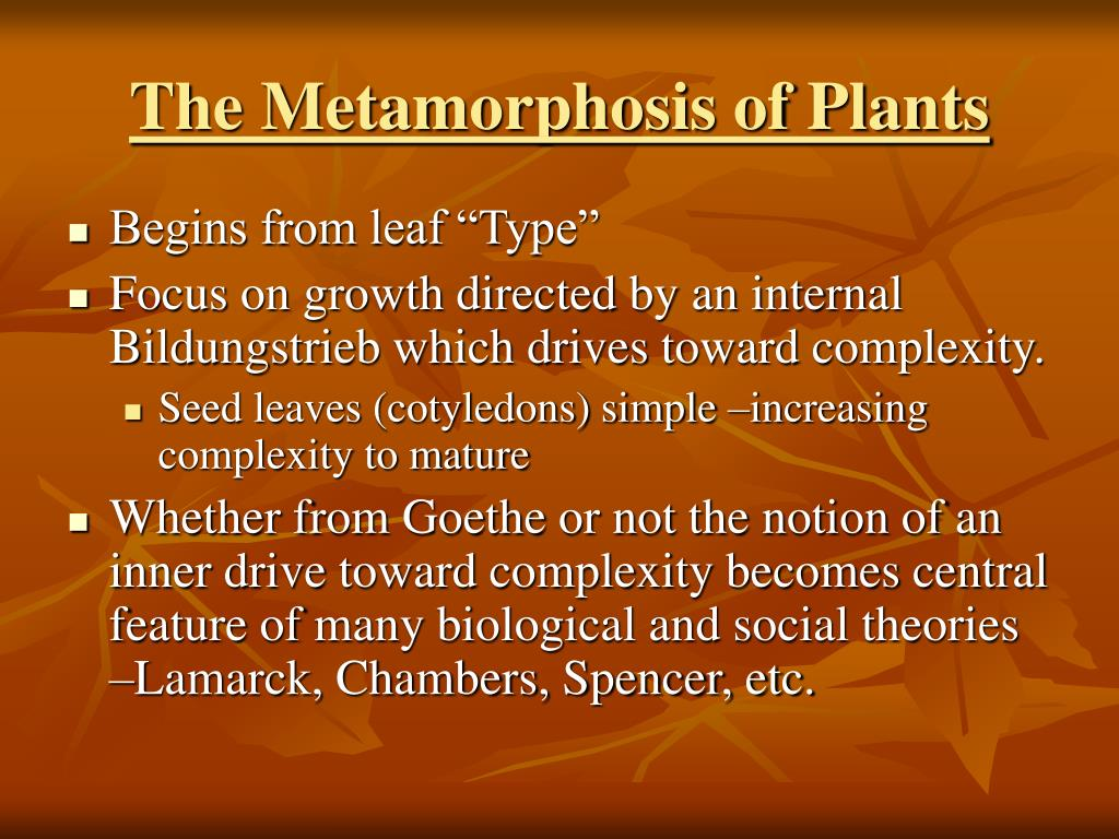 The Metamorphosis of Plants