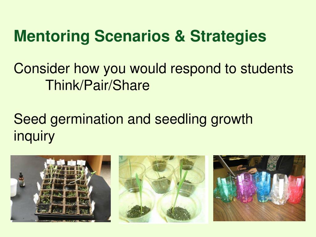 Mentoring Scenarios & Strategies