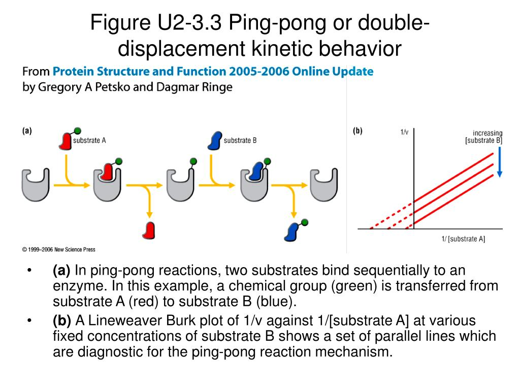 Figure U2-3.3 Ping-pong or double-displacement kinetic behavior