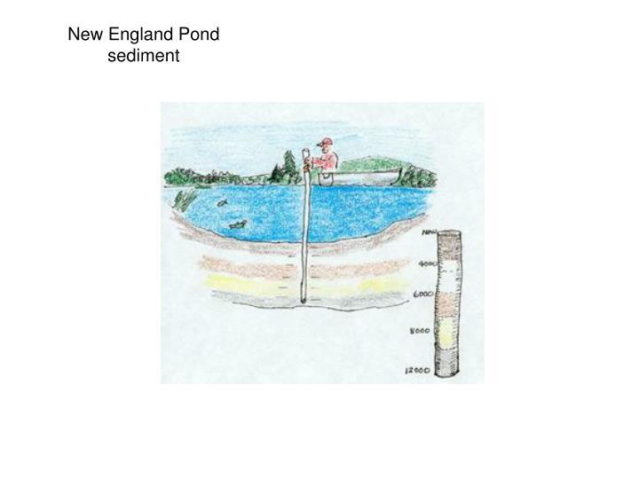 New England Pond sediment