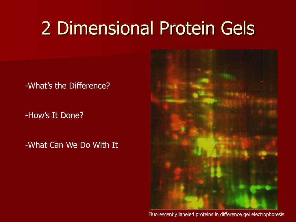 2 Dimensional Protein Gels