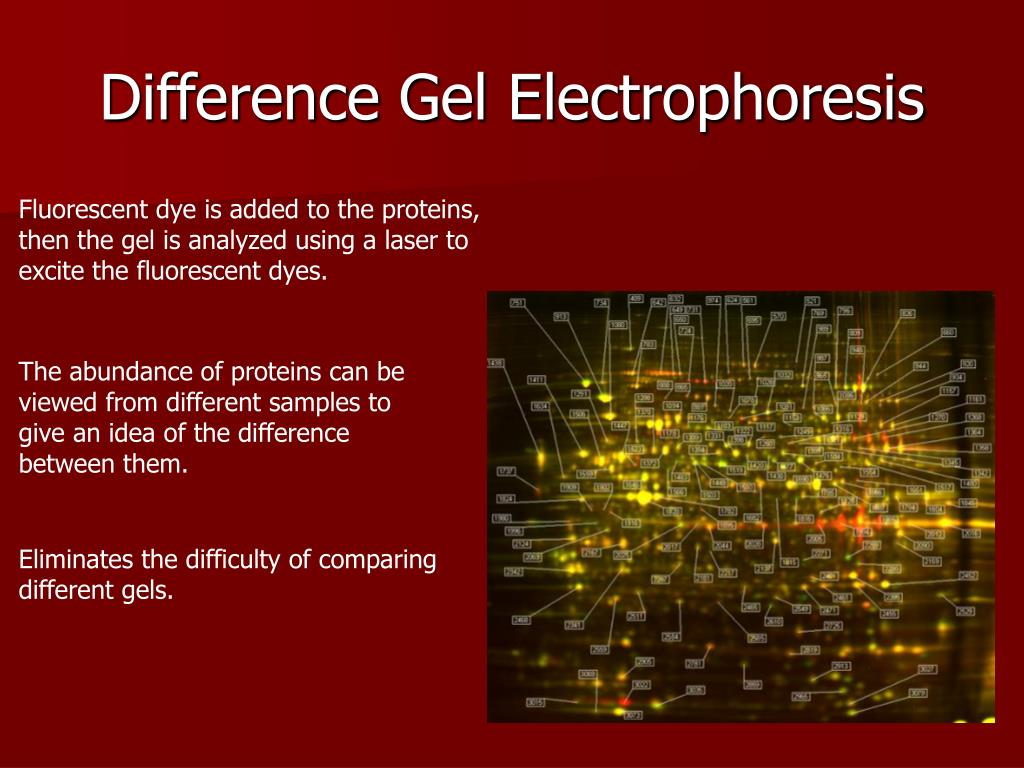 Difference Gel Electrophoresis