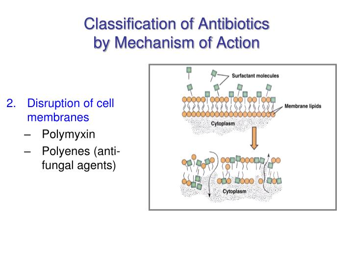 Classification of antibiotics by mechanism of action3