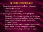 Specialios paslaugos l.jpg
