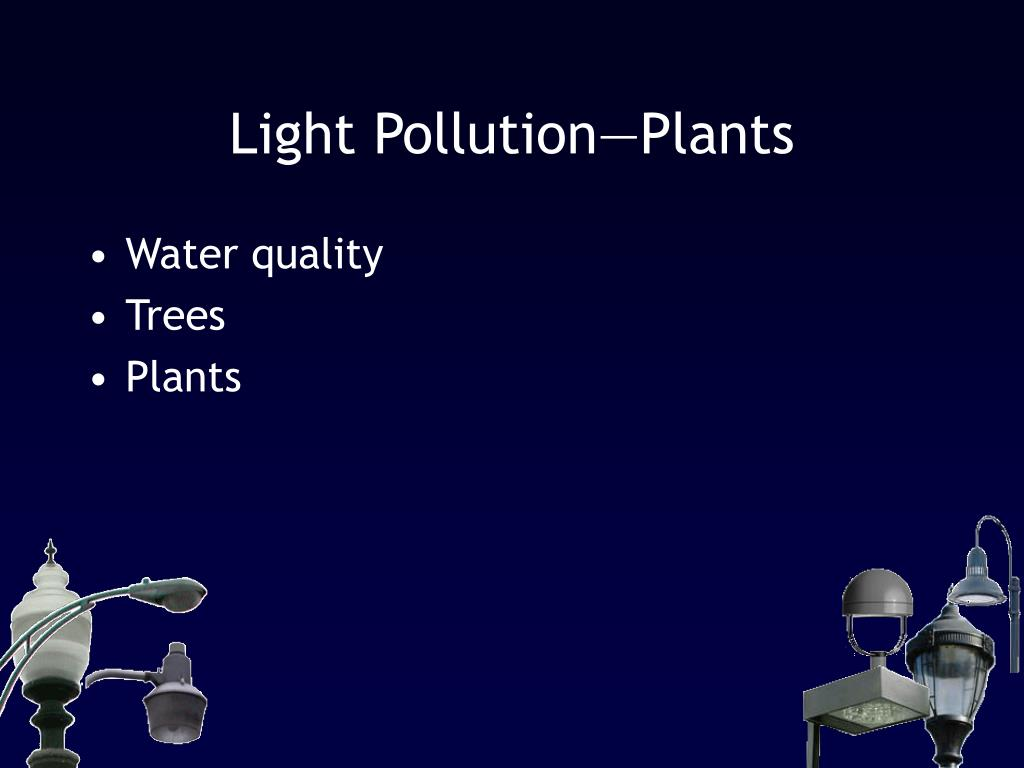 Light Pollution—Plants