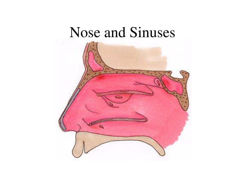 Nose and Sinuses