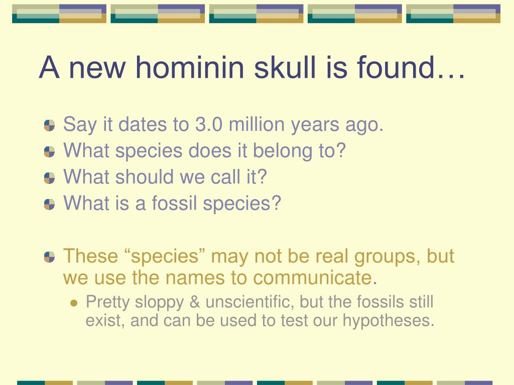 A new hominin skull is found…