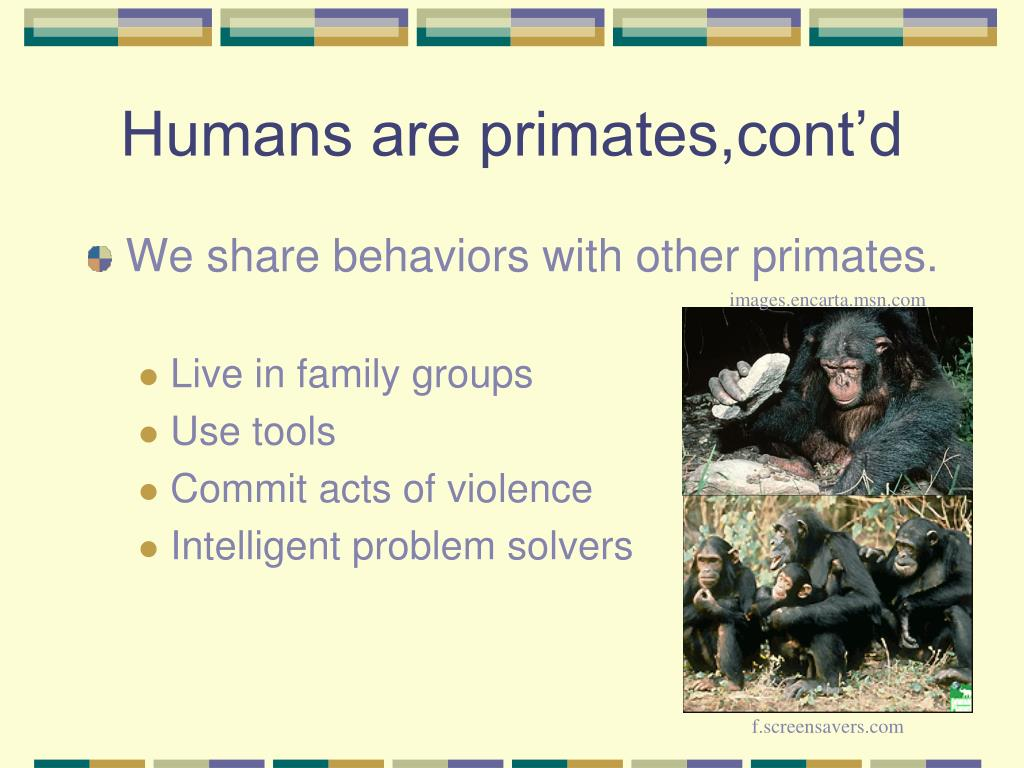 Humans are primates,cont'd