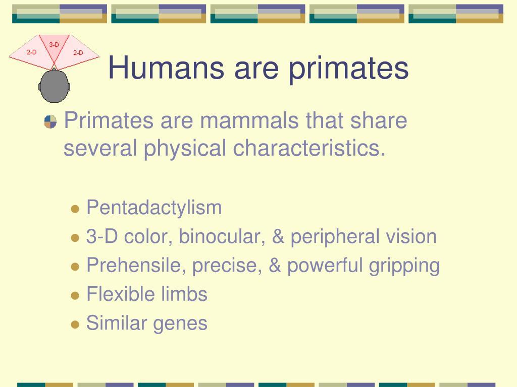 Humans are primates
