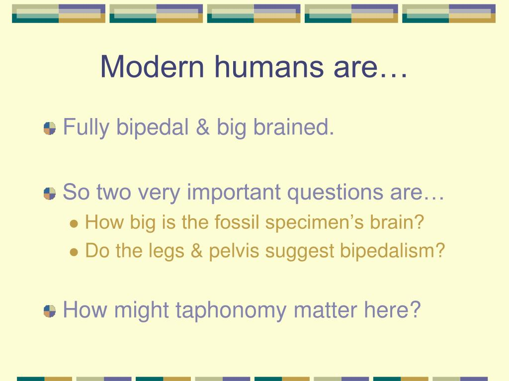 Modern humans are…