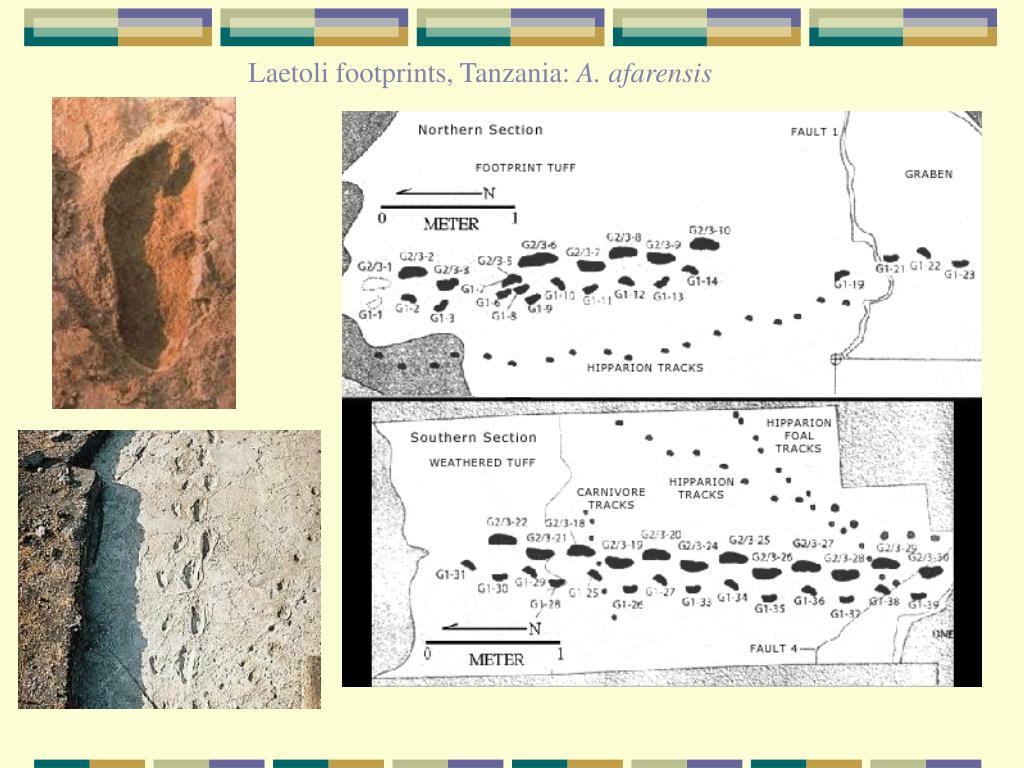 Laetoli footprints, Tanzania: