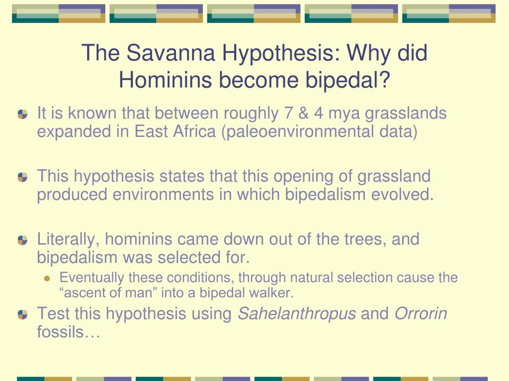 The Savanna Hypothesis: Why did Hominins become bipedal?