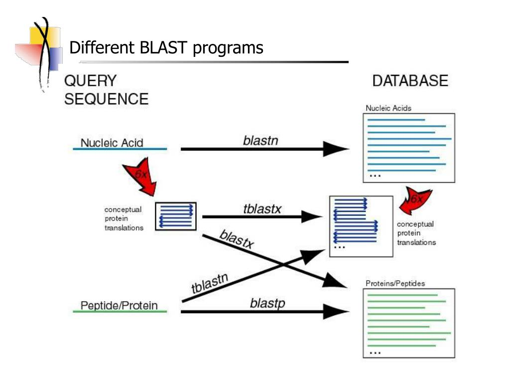 Different BLAST programs