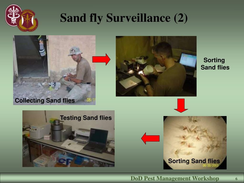 Sand fly Surveillance (2)