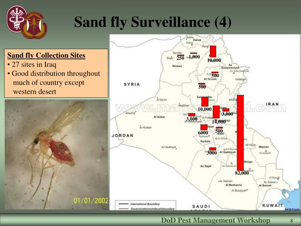 Sand fly Surveillance (4)