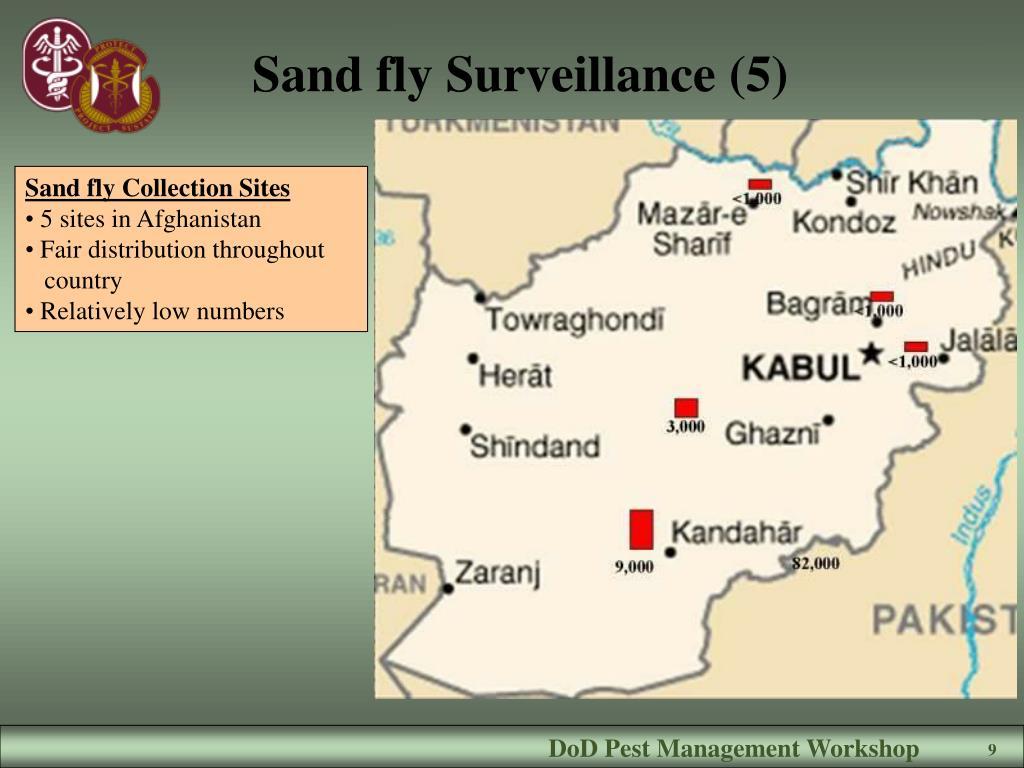 Sand fly Surveillance (5)
