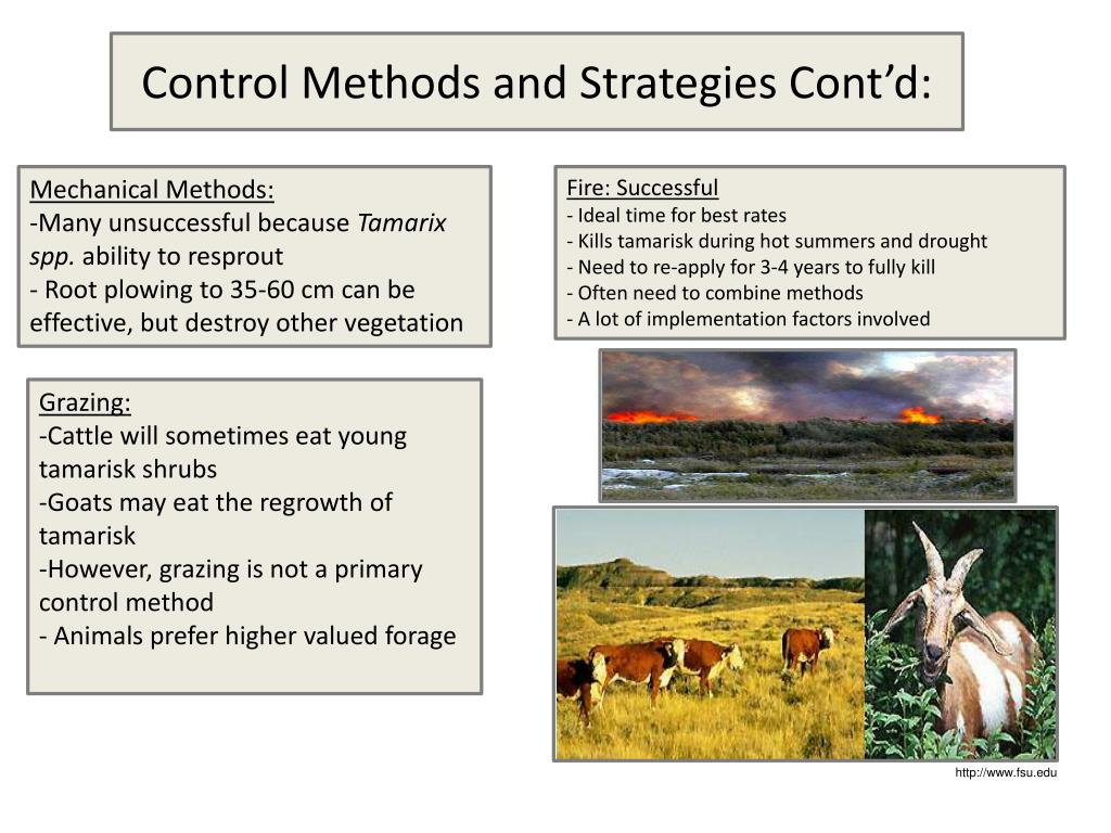 Control Methods and Strategies Cont'd: