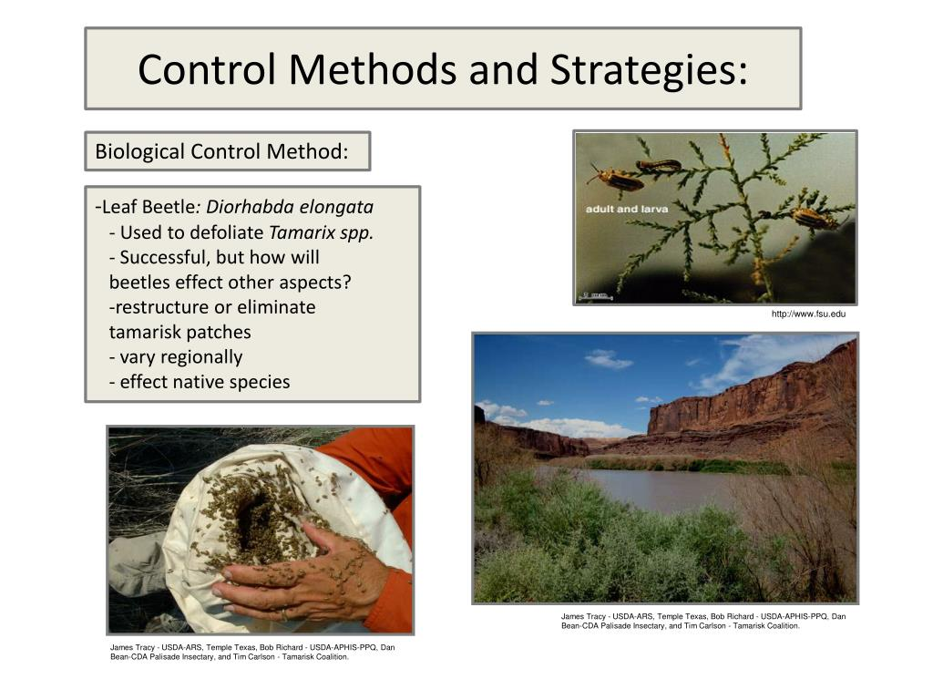 Control Methods and Strategies: