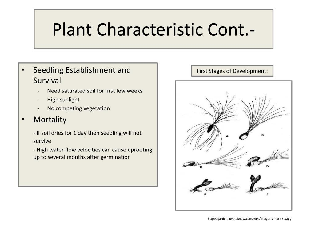 Plant Characteristic Cont.-