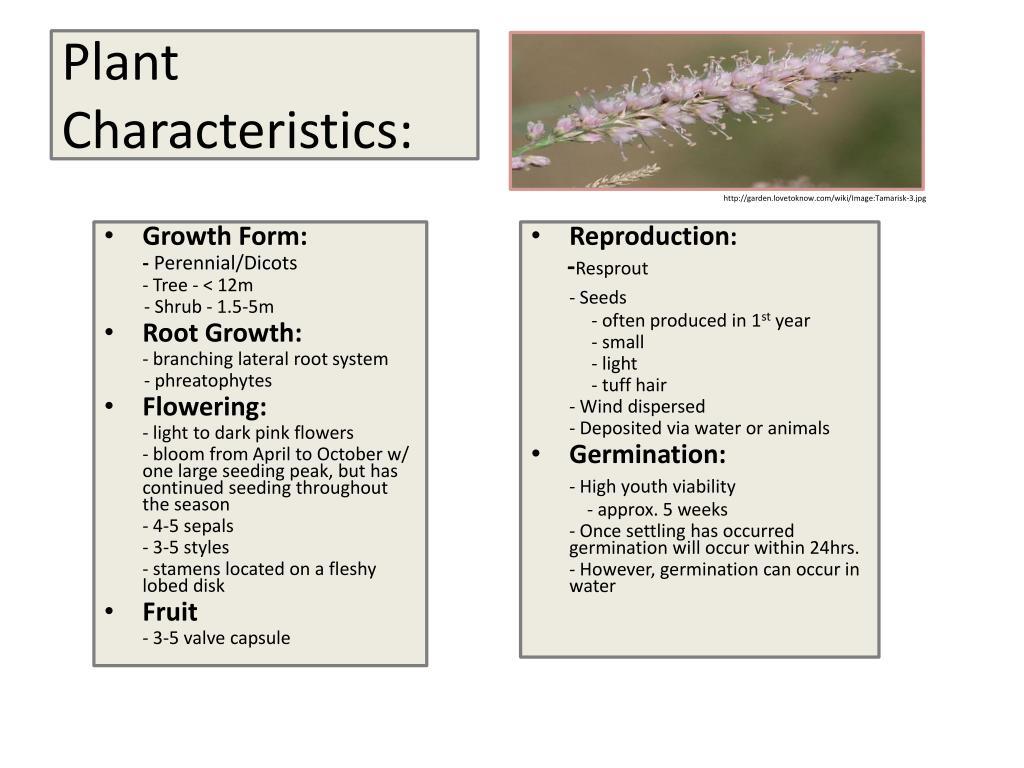 Plant Characteristics: