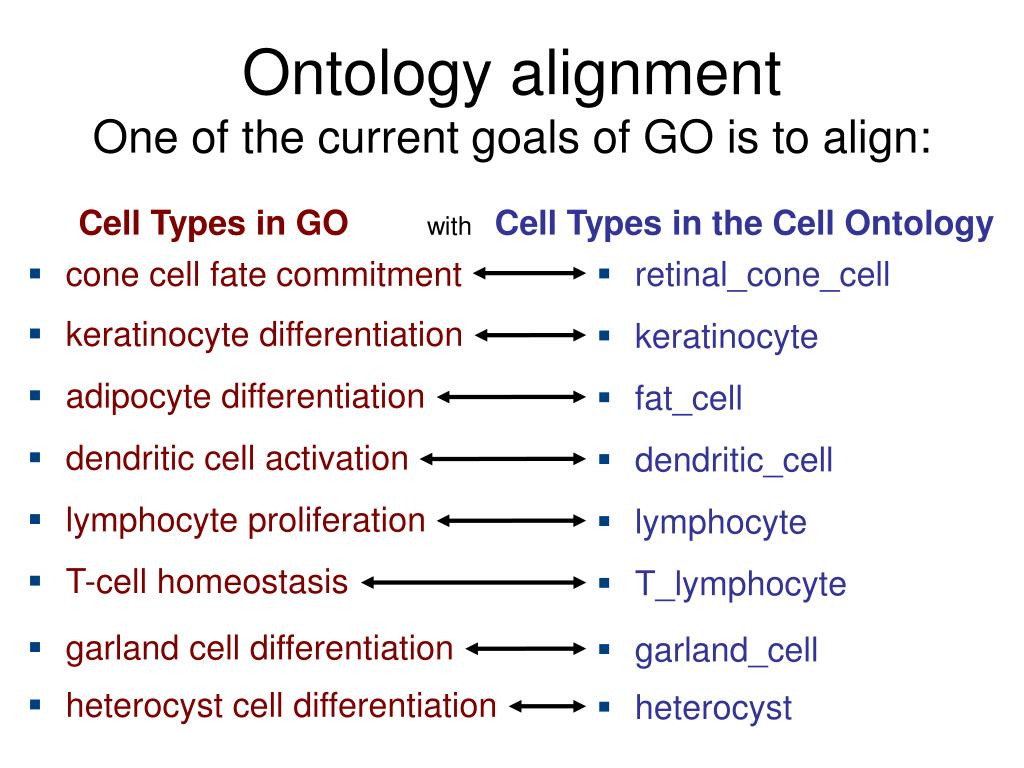 cone cell fate commitment