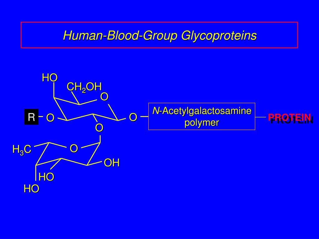 Human-Blood-Group Glycoproteins