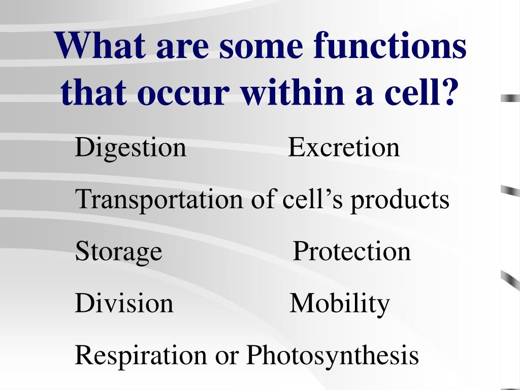 What are some functions that occur within a cell?