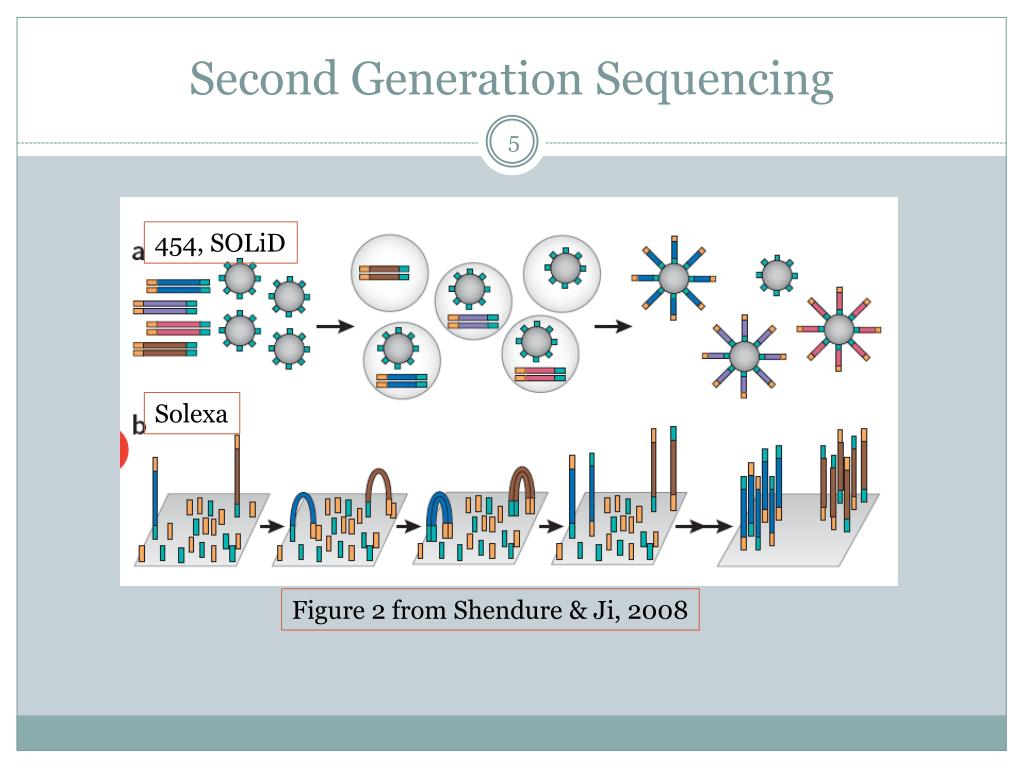 thied generation dna sequencing pdf