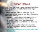 human rabies47
